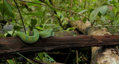 Snake Symposium: Venomous snakes as flagship species